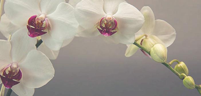 Perfumaria Natural: Do Conceito à Criação | Julho 2018 em Ribeirão Preto